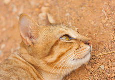 Face of a cat lying on the ground Stock Image