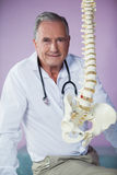 Portrait of physiotherapist examining a spine model Stock Image