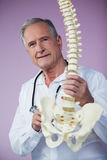 Portrait of physiotherapist examining a spine model Royalty Free Stock Photography