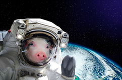 Portrait of a pig astronaut in space. On background of the globe. Elements of this image furnished by NASA Royalty Free Stock Photos