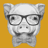 Portrait of Piggy with glasses and bow tie. Hand drawn illustration Royalty Free Stock Photo
