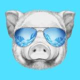 Portrait of Piggy. Royalty Free Stock Image