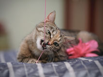 Portrait of the playing cat. Royalty Free Stock Images