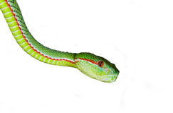 Portrait of a poisonous snake Stock Images