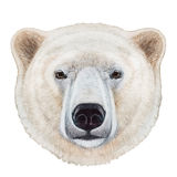 Portrait of Polar Bear. Hand-drawn illustration, digitally colored Royalty Free Stock Photography