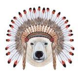 Portrait of Polar Bear in war bonnet. Stock Photos
