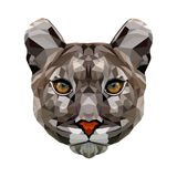 Portrait polygonal de puma Photographie stock