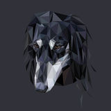 Portrait polygonal de Saluki image libre de droits