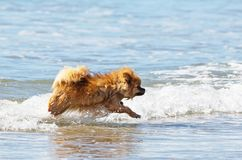 Spitz in the sea Royalty Free Stock Photography