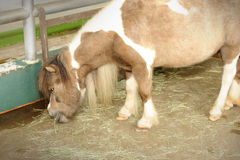 Portrait of pony. Close up of beautiful pony Stock Photo