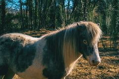 Portrait of a pony stock images