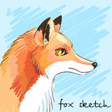 Portrait of predatory fox hand-drawn. Individual corporate identity. It can be used as a postcard. Vector Stock Photo