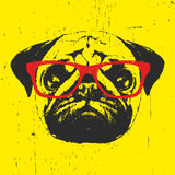 Portrait of Pug Dog with glasses. Hand drawn illustration. T-shirt design.Vector Stock Photography
