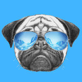 Portrait of Pug Dog with mirror sunglasses. Stock Photography