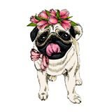 Portrait of pug dog wearing tulip crown. Welcome spring. Hand drawn colored vector illustration. Engraved detailed art. Good for Easter greeting card, poster Stock Photography