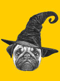 Portrait of Pug dog with witch hat. Halloween illustration Royalty Free Stock Photos