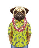 Portrait of Pug in summer shirt with Hawaiian Lei. Hand-drawn illustration, digitally colored Stock Photos