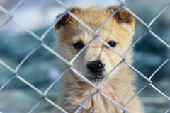 Portrait of a puppy through the bars in the animal shelter royalty free stock photography