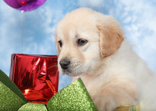 Portrait of puppy Royalty Free Stock Images