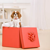 Portrait of puppy in large gift wraped box Stock Photography