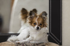 Portrait of a puppy Royalty Free Stock Photo