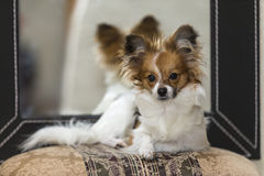 Portrait of a puppy Royalty Free Stock Images