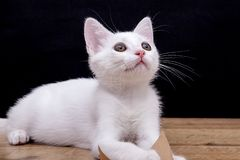 Beautiful cat isolated on white stock images