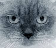 Cat's sight Stock Image