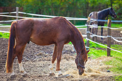 Portrait of purebred white horse Royalty Free Stock Photos