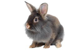 Portrait of rabbit Royalty Free Stock Images