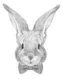Portrait of Rabbit with  bow tie. Hand drawn illustration Stock Image
