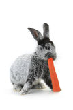 Portrait rabbit Stock Photo