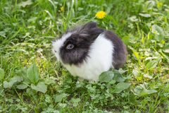 Portrait of a rabbit Royalty Free Stock Images