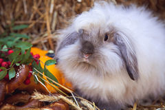 Portrait of rabbit with pretzels and pumpkin Stock Photography
