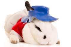 Portrait of a Rabbit wearing blue hat Stock Image