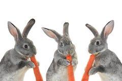 Portrait rabbits Stock Photo