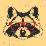 Portrait of Raccoon with glasses. Stock Image