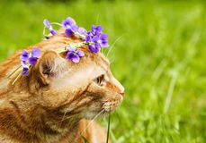 Portrait of Red cat crowned with a chaplet of pansy flowers Stock Photo