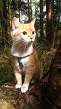 Portrait of a red cat in the forest. Head, eye, ears, hair. Portrait of a red cat in the forest. Head eye, ears, hair, whiskers, body. Wall. Beautiful picture Stock Photos