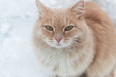 Portrait of a red frozen street cat. Cat in the snow against the backdrop of snowflakes. The concept of the problem of Stock Images