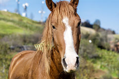 Portrait of red horse in the autumn mountain Stock Photos