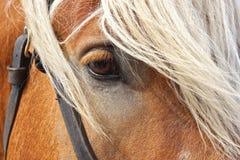Portrait of horse. Stock Photo