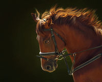 Portrait of red horse Royalty Free Stock Photo