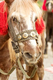 A portrait of red horse Stock Images