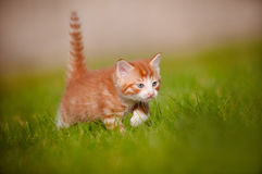 Portrait of a red kitten outdoors Stock Photo
