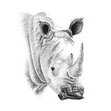 Portrait of rhino drawn by hand in pencil Stock Image