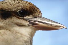 Portrait riant de martin-chasseur Photo libre de droits