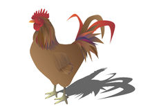 Portrait of a rooster Stock Images