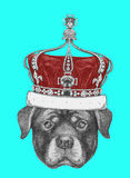 Portrait of Rottweiler with crown. Royalty Free Stock Images
