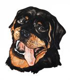 Portrait of a Rottweiler. Drawing watercolor Stock Photo